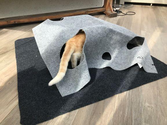 Katze mit Trixie Adventure Carpet