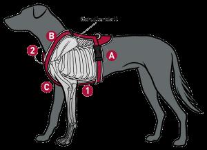 Richtiger Sitz eines Brustgeschirrs bei Hunden