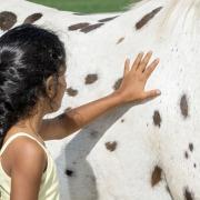 Kind berührt ein Pferd